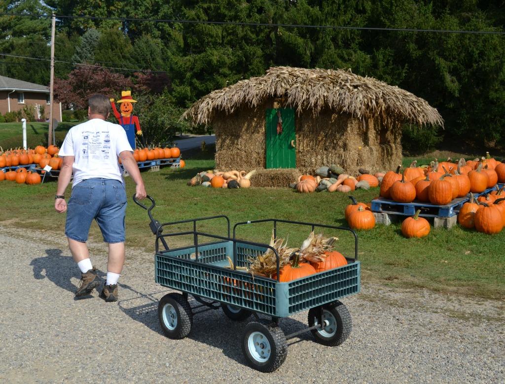 pumpkin patch, fall, fall decorating