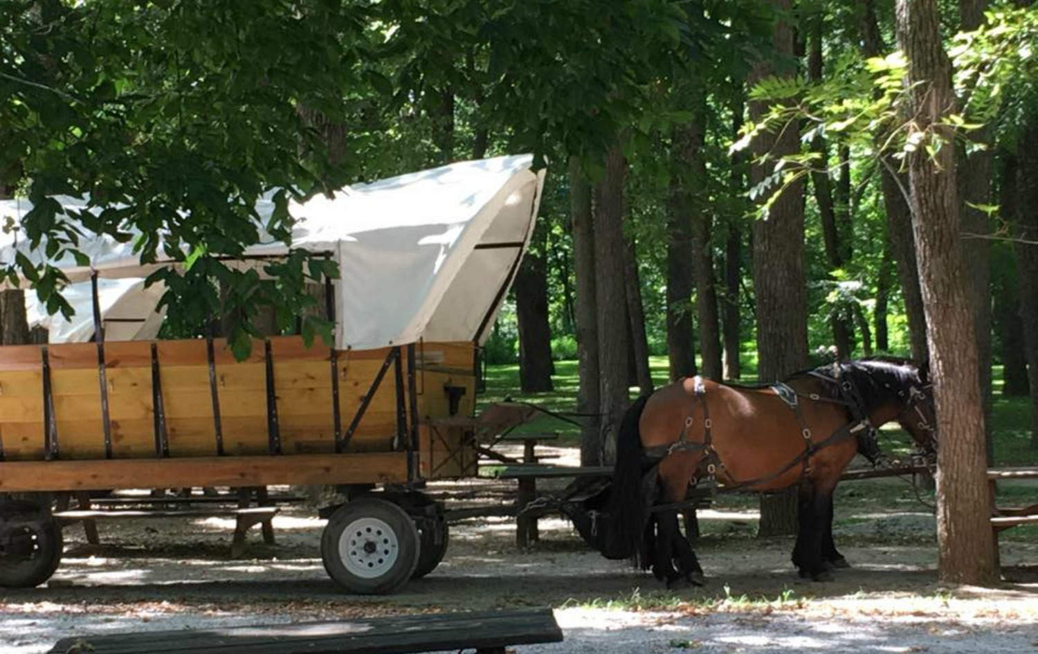 blennerhassett island, horse and carriage rides